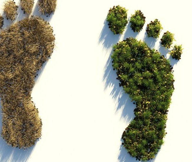 Footprint as plants